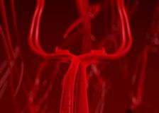 Blood arteries royalty free illustration