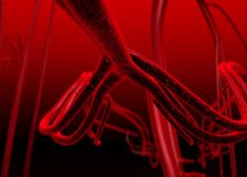 Blood arteries Royalty Free Stock Photography