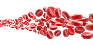 Blood cells. On white background Royalty Free Stock Images