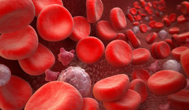 Blood Cells : erythrocyte, thrombocyte, leukocyte Royalty Free Stock Photography