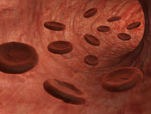 Blood cells in vein Stock Images
