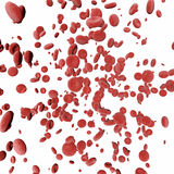 Blood cells. On white background Royalty Free Stock Photography