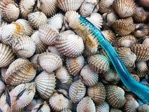 Blood clam brush Stock Image