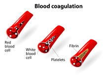 Blood coagulation Stock Images