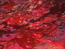 Blood covered 6. Spilled blood on the ground. Liquid blood background royalty free stock image