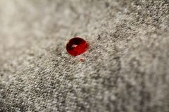 Blood drop on whool texture Stock Images