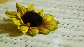 Blood Drops on the Yellow Flowers and Music Notes. Video stock video footage