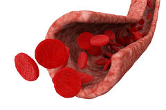 Blood flow and cells Stock Images