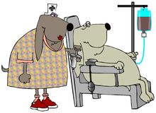 Blood Hounds. This illustration depicts a patient dog having its blood taken by a nurse canine Stock Image