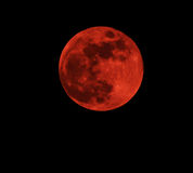 Blood red moon. Concept of a red full moon against a black sky Stock Images