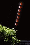 Blood moon lunar eclipse sequence Stock Image