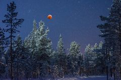 Blood moon in the taiga royalty free stock photography