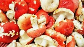 Blood mushroom. Bloody mushroom same type with mushroom in Mario Royalty Free Stock Images