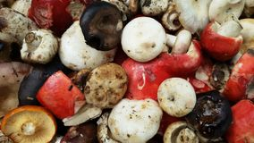 Blood mushroom Royalty Free Stock Images
