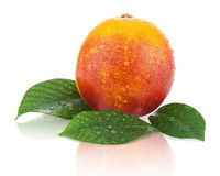 Blood orange with green leaves isolated on white background. Royalty Free Stock Photography