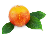 Blood orange with green leaves isolated on white background. Royalty Free Stock Image