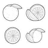 Blood Orange. Vector Illustration Hand Drawn Fruit Cartoon Art royalty free illustration