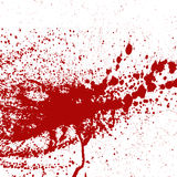 Blood or paint splatters splash spot red stain blot patch liquid texture drop grunge abstract dirty mark vector. Set of various blood or paint splatters splash Royalty Free Stock Photo