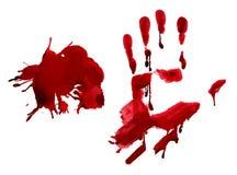 Blood palm Stock Image