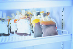 Blood pouch in refrigerator at blood bank Royalty Free Stock Images