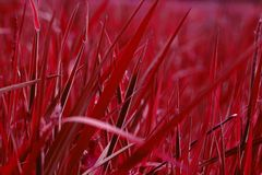 Blood red grass. A field of grass turned blood red in postprocessing Stock Photo