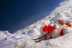 Blood on snow. Red flower and blood near a bride's dress covering white snow Stock Photography