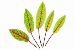 Blood Sorrel Stock Photography
