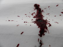 Blood stain on the snow Stock Photo