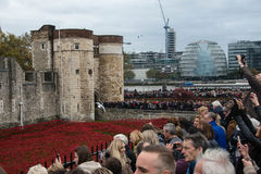 `Blood Swept Lands and Seas of Red`. Close up of the 888,246 ceramic poppies marking the centenary of the outbreak of the First World War in the moat Royalty Free Stock Photos