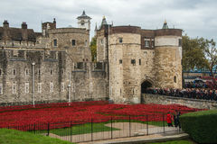 `Blood Swept Lands and Seas of Red`. Close up of the 888,246 ceramic poppies marking the centenary of the outbreak of the First World War in the moat Stock Photography