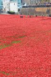 Blood Swept Lands and Seas of Red POPPIES Royalty Free Stock Photography