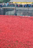 Blood Swept Lands and Seas of Red POPPIES Stock Images