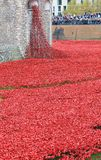Blood Swept Lands and Seas of Red Poppies. London, United Kingdom - 28th September 2014: Almost 900,000 ceramic poppies are installed at The Tower of London to Stock Photos