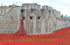 Blood Swept Lands and Seas of Red Poppies. London, United Kingdom - 28th September 2014: Almost 900,000 ceramic poppies are installed at The Tower of London to Royalty Free Stock Image