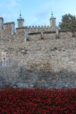 Blood Swept Lands and Seas of Red Poppies Stock Photo