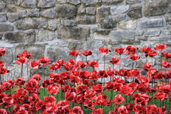 Blood Swept Lands and Seas of Red Poppies Stock Photography