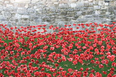 Blood Swept Lands and Seas of Red Poppies Royalty Free Stock Photo
