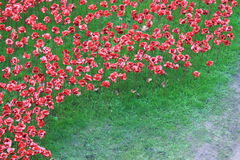 Blood Swept Lands and Seas of Red Poppies. London, United Kingdom - 28th September 2014: Almost 900,000 ceramic poppies are installed at The Tower of London to Royalty Free Stock Images