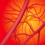Blood system. Circulatory system. Vector Illustration (EPS v.8.0 Stock Photography