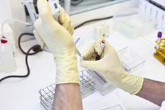 Blood test. In the laboratory Royalty Free Stock Photo