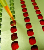 Blood testing in the lab. Blood tests in clinical laboratory device Royalty Free Stock Images