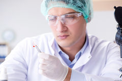 The blood testing in the lab Royalty Free Stock Photos
