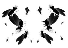 Blood thirsty mosquitoes Stock Image