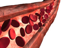 Blood vein. 3d rendered vein with bloodcells Stock Image