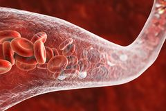 Blood vessel with erythrocytes and leukocytes Stock Photo