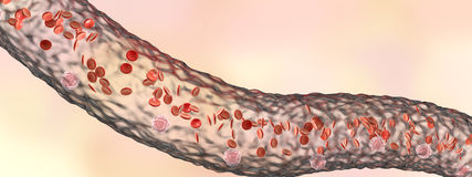 Blood vessel with flowing blood cells. Side view, 3D illustration Royalty Free Stock Photography