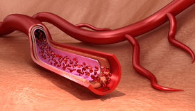 Blood vessel sliced macro with erythrocytes vector illustration