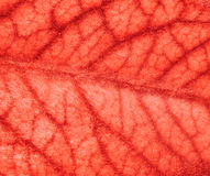 Blood vessels Stock Image