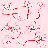 Blood vessels and capillaries. Flat design, vector illustration, vector Stock Photos