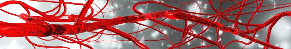 Blood vessels, circulatory system. Arteries and veins Royalty Free Stock Images
